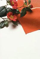 風呂敷とツバキ 11002053608| 写真素材・ストックフォト・画像・イラスト素材|アマナイメージズ