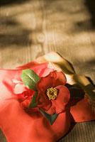 袱紗とツバキ 11002053615| 写真素材・ストックフォト・画像・イラスト素材|アマナイメージズ