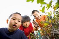 虫眼鏡をもって観察をする三人の男の子 11002053863| 写真素材・ストックフォト・画像・イラスト素材|アマナイメージズ
