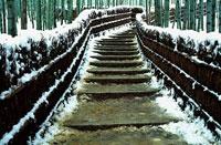 嵯峨野の竹やぶ 雪景色