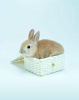 カゴの中に入ったウサギ