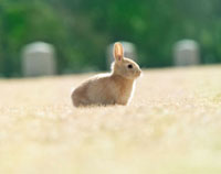 芝生の上に立つウサギ
