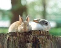 切り株の上に座る2匹のウサギ