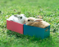 箱の中に入った2匹のウサギ