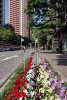 六本木けやき坂通りの花壇