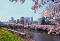 外堀の桜と電車