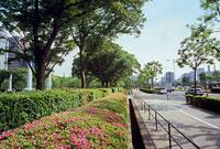 植え込みと街路樹