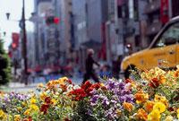 銀座1丁目の花壇