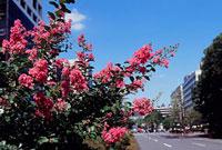 内幸町2丁目付近の花