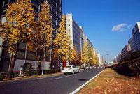昭和通り付近の紅葉 11002054491| 写真素材・ストックフォト・画像・イラスト素材|アマナイメージズ