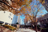 紅葉した街路樹とビル 11002054492| 写真素材・ストックフォト・画像・イラスト素材|アマナイメージズ