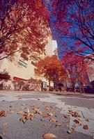 落ち葉 新宿中央公園前交差点付近 11002054495| 写真素材・ストックフォト・画像・イラスト素材|アマナイメージズ