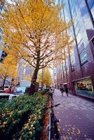 紅葉した街路樹とビル 西新宿1丁目付近 11002054496| 写真素材・ストックフォト・画像・イラスト素材|アマナイメージズ