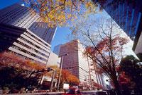 西新宿6丁目付近の紅葉 11002054499| 写真素材・ストックフォト・画像・イラスト素材|アマナイメージズ