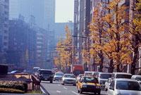 昭和通り 11002054504| 写真素材・ストックフォト・画像・イラスト素材|アマナイメージズ
