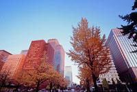 紅葉した街路樹とビル 皇居外苑 11002054505| 写真素材・ストックフォト・画像・イラスト素材|アマナイメージズ