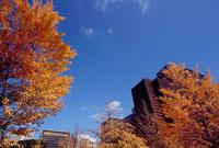 和田倉門付近の紅葉 11002054507| 写真素材・ストックフォト・画像・イラスト素材|アマナイメージズ