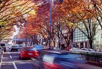 表参道の紅葉 11002054512| 写真素材・ストックフォト・画像・イラスト素材|アマナイメージズ