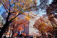 紅葉した街路樹とビル 新宿中央公園北交差点付近 11002054513| 写真素材・ストックフォト・画像・イラスト素材|アマナイメージズ