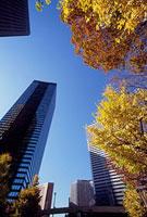 紅葉した街路樹とビル 新宿警察署裏交差点付近 11002054514| 写真素材・ストックフォト・画像・イラスト素材|アマナイメージズ