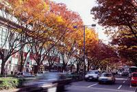 表参道の紅葉 11002054515| 写真素材・ストックフォト・画像・イラスト素材|アマナイメージズ