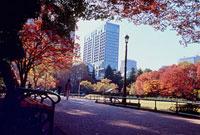 日比谷公園の紅葉 11002054516| 写真素材・ストックフォト・画像・イラスト素材|アマナイメージズ