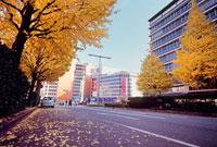 紅葉した街路樹と道路 新宿駅西口付近 11002054518| 写真素材・ストックフォト・画像・イラスト素材|アマナイメージズ
