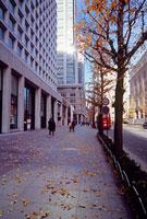 丸の内2丁目付近の紅葉 11002054519| 写真素材・ストックフォト・画像・イラスト素材|アマナイメージズ