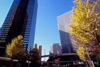 紅葉した街路樹とビル 新宿警察署裏交差点付近 11002054520| 写真素材・ストックフォト・画像・イラスト素材|アマナイメージズ