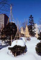 雪景色の大通公園
