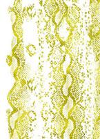 箔パイソン 11002056226| 写真素材・ストックフォト・画像・イラスト素材|アマナイメージズ