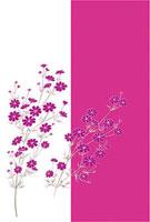 秋桜 11002056317| 写真素材・ストックフォト・画像・イラスト素材|アマナイメージズ