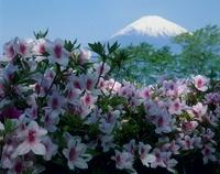 御殿場市 ツツジと富士山