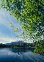 河口湖 新緑と富士山