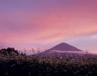 富士宮市 ソバの花と富士山 11002059171| 写真素材・ストックフォト・画像・イラスト素材|アマナイメージズ