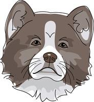 犬 秋田犬