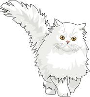 猫 ペルシャ 11002068705| 写真素材・ストックフォト・画像・イラスト素材|アマナイメージズ