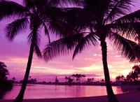 ヤシの木と砂浜