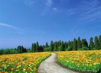 花畑と青空