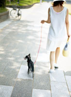 犬と散歩する女性 後ろ姿 11004007100  写真素材・ストックフォト・画像・イラスト素材 アマナイメージズ