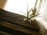 階段の観葉植物