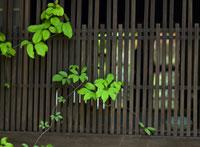 和室の窓と植物