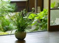 茶室の植物