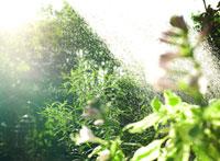 庭の水しぶき