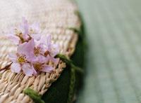 座布団と桜