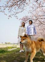桜を見上げるカップルと犬