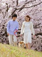 桜の下を散歩するカップルと犬