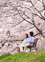桜の下のベンチに座るカップル