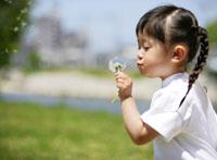 たんぽぽの綿毛で遊ぶ女の子