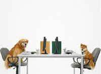 椅子に座る二匹の犬